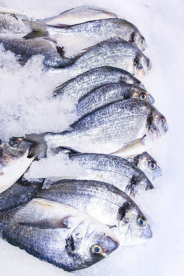 Fresh fish. In ice on market stock photo