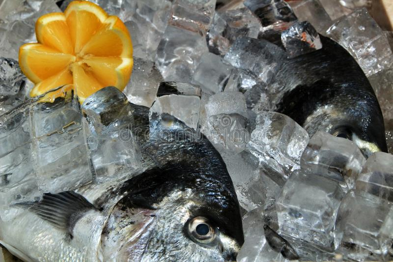 Fresh fish with ice for sale. In a market seafood cooking uncooked raw delicious tasty catch ingredient dorade mackerel freshly gilt-head eating arrangement stock image