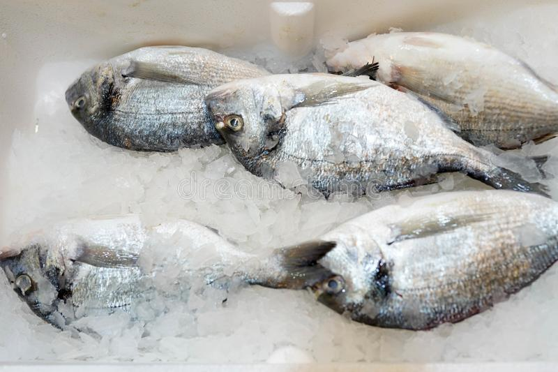 Fresh fish on ice for sale at market. frozen food in store.  stock photo