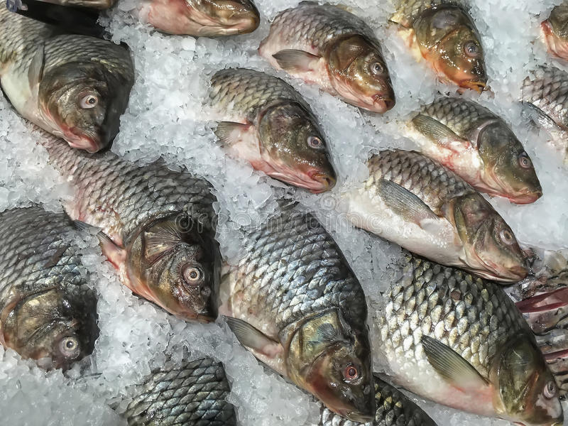 Fresh fish lying in ice closeup royalty free stock images