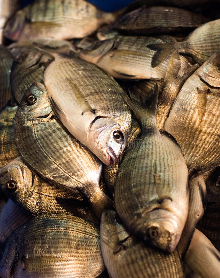 Download Fresh fish in the market stock image. Image of fish, fishy - 1376061