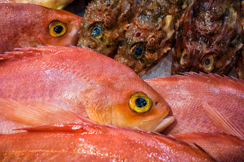 Fresh fish stock photo