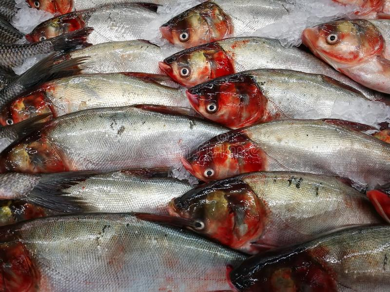 Fresh fish in the market royalty free stock photography