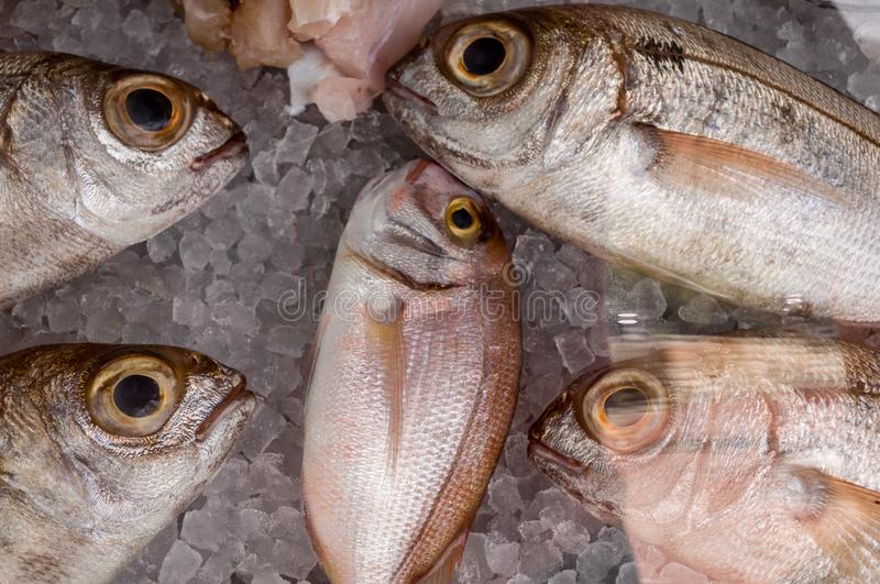 Fresh fish at the market in the freezer. Fresh fish on ice at the market fishery royalty free stock photo
