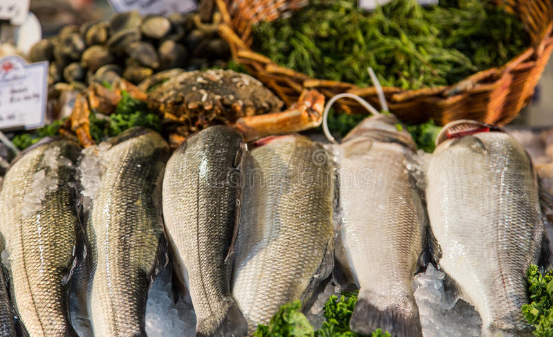 Fresh Fish in Market. Fresh frozed fish in a seafood market royalty free stock photos