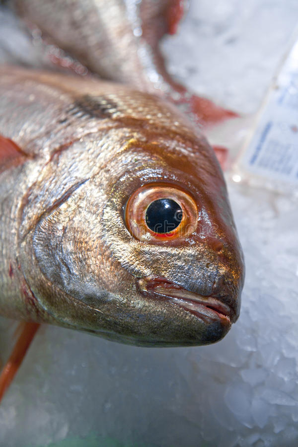 Fresh fish at market placed on ice stock images