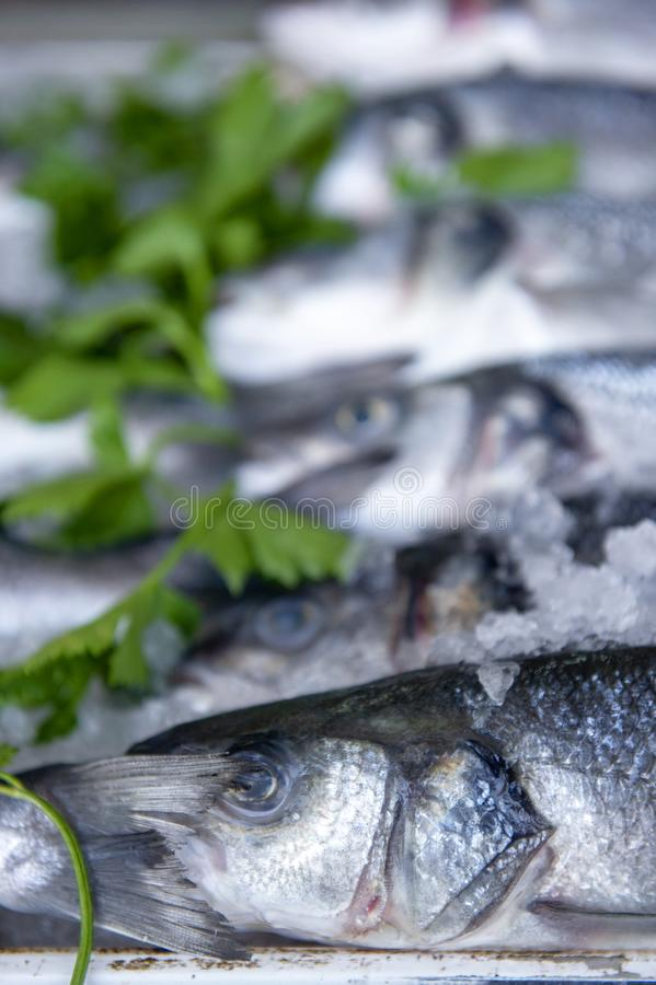 Fresh fish in the market , Sea fish pile top view royalty free stock photos