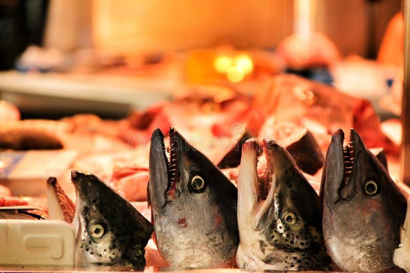 Fresh fish at a market stall in Cartagena royalty free stock photo