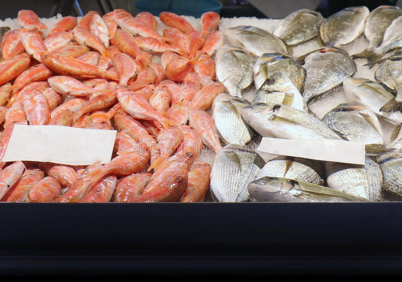 Fresh fish market stall. Pile of fresh sea fish and shrimps on ice sold on market stall royalty free stock photography