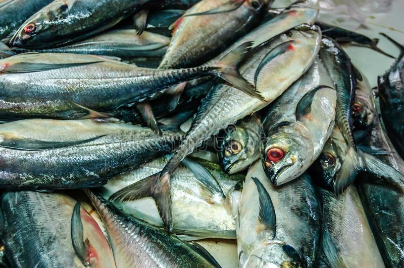 Fresh fish on market stall in Thailand. Pile of fresh fish on market stall in Southern Thailand royalty free stock image