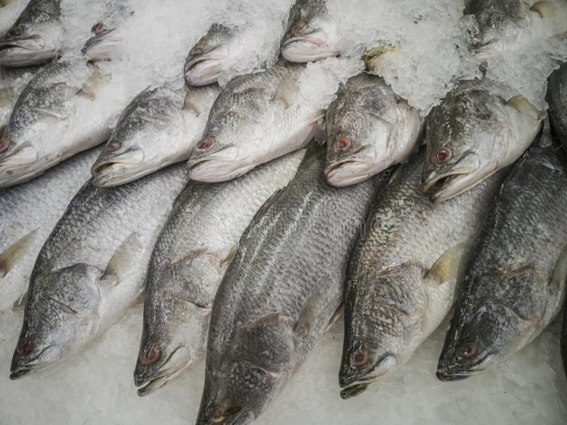 Fresh fish in the market. Thailand animal background bream catch cold cook cooking cuisine delicious dinner dorado eating fin fishes fishing food freshness stock image