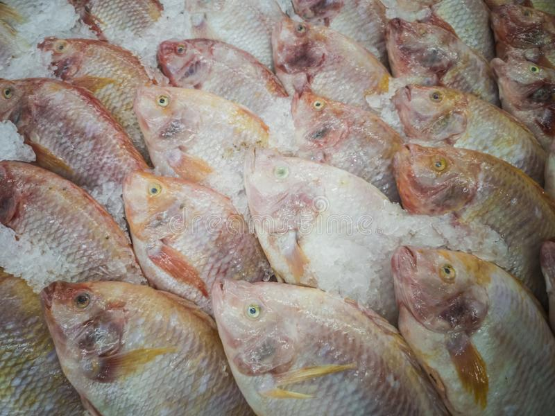 Fresh fish in the market. Thailand animal background bream catch cold cook cooking cuisine delicious dinner dorado eating fin fishes fishing food freshness royalty free stock images