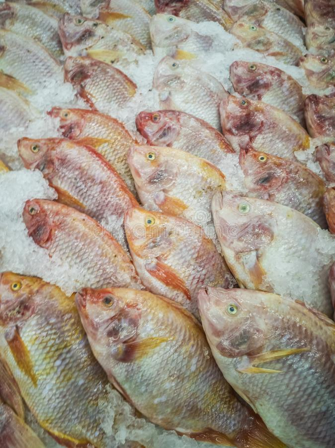 Fresh fish in the market. Thailand animal background bream catch cold cook cooking cuisine delicious dinner dorado eating fin fishes fishing food freshness royalty free stock photos