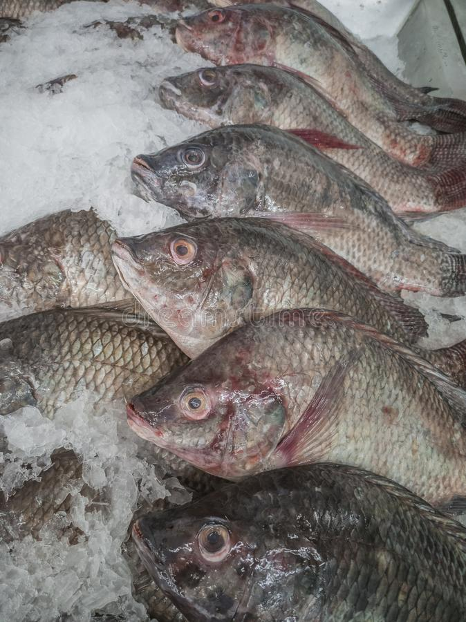 Fresh fish in the market. Thailand animal background bream catch cold cook cooking cuisine delicious dinner dorado eating fin fishes fishing food freshness stock photography