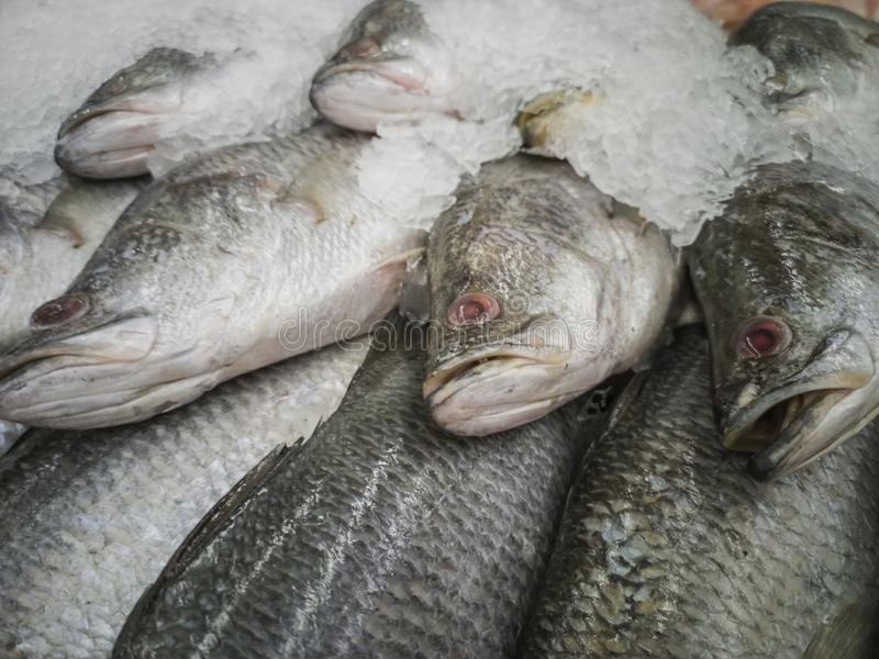 Fresh fish in the market. Thailand animal background bream catch cold cook cooking cuisine delicious dinner dorado eating fin fishes fishing food freshness stock images