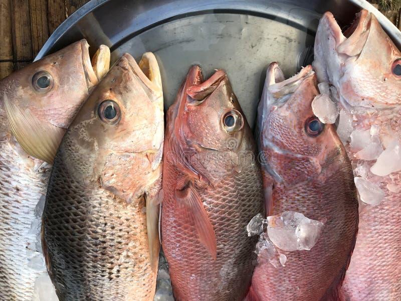 Fresh fish put on ice in market. Phuket in Thailand. stock image