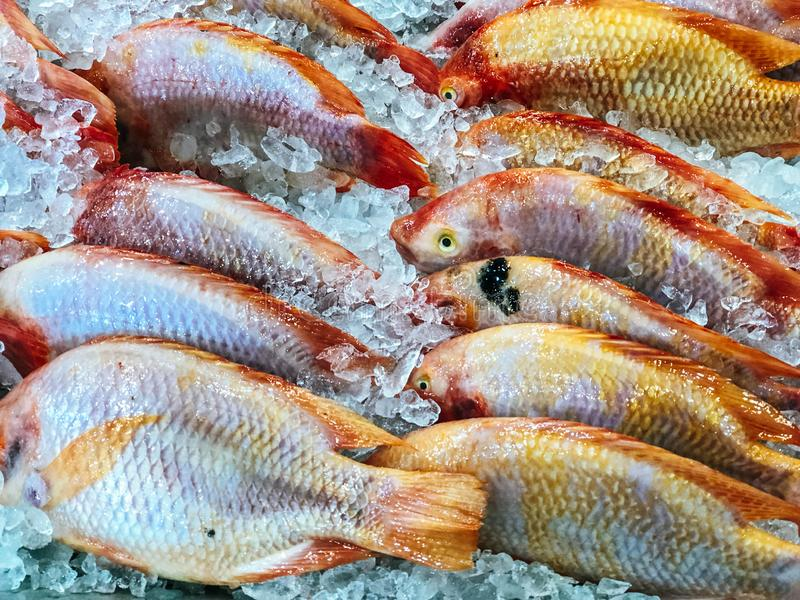 Fresh fish for sale at the market royalty free stock images