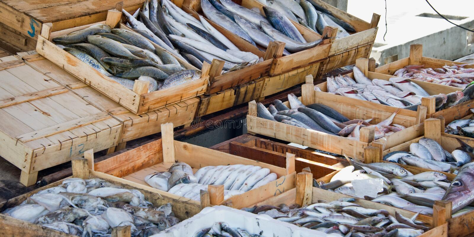 Fresh fish on sale on the market of the harbour of Bodrum Turkey stock photo