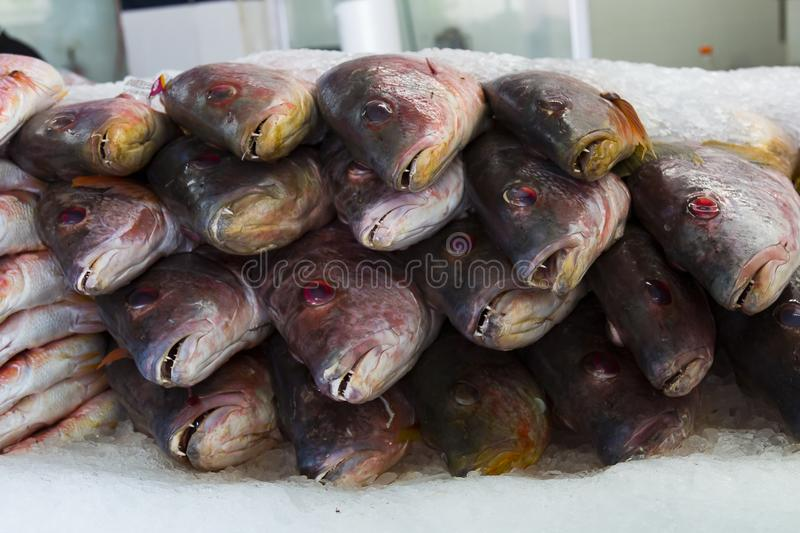 Fresh Fish For Sale in a Market in Tijuana, Mexico. A group of fresh fish piled on ice for sale in a fish market in Tijuana, Mexico stock photography