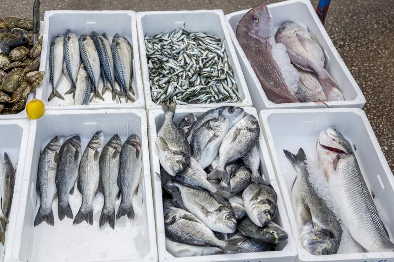Fresh fish and seafood at the market of Budva in Montenegro.  stock photography