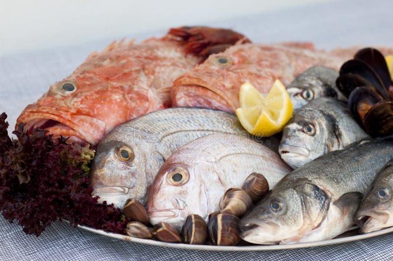 Fresh Fish, Shellfish and seafood royalty free stock photography