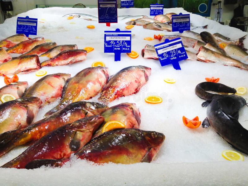 Download Fresh fish stand stock photo. Image of sale, fresh, many - 23731244