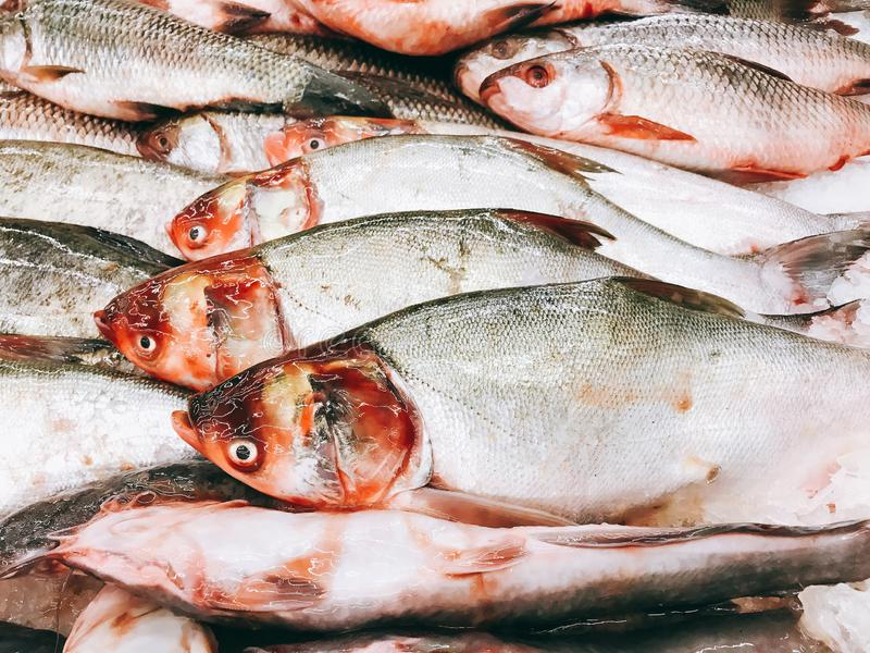 Fresh fish in the supermarkets. Are frozen with ice royalty free stock photos