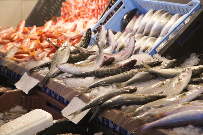 Fresh fished sea bass. Fresh fish at the fish market: sea bass in the focus royalty free stock images