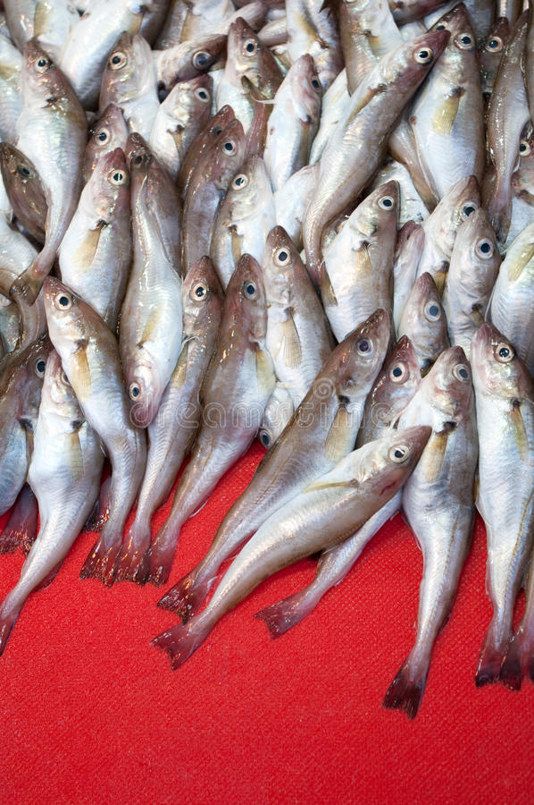 Fresh fishes at the market