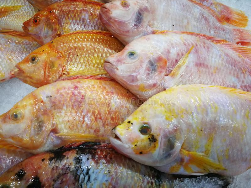 Fresh fish in the market stock photos