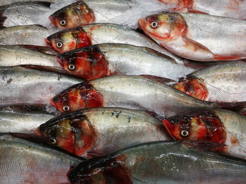 Fresh fish in the market royalty free stock image