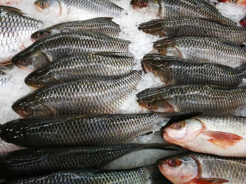 Fresh fish in the market royalty free stock images
