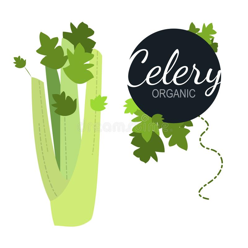 Fresh flat organic celery isolated. On white background royalty free illustration