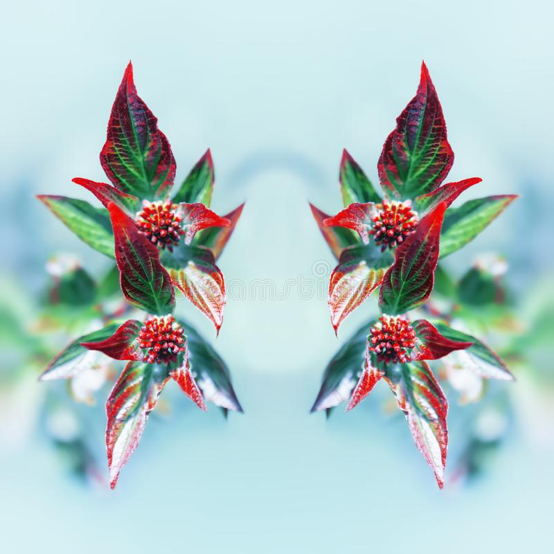 Fresh Floral Mirror Pattern From Red Leaves Against Light Blue royalty free stock images