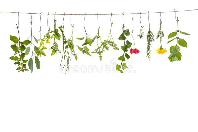 Fresh flovouring herbs and eatable flowers hanging on a string, in front of interieur backgroung royalty free stock image