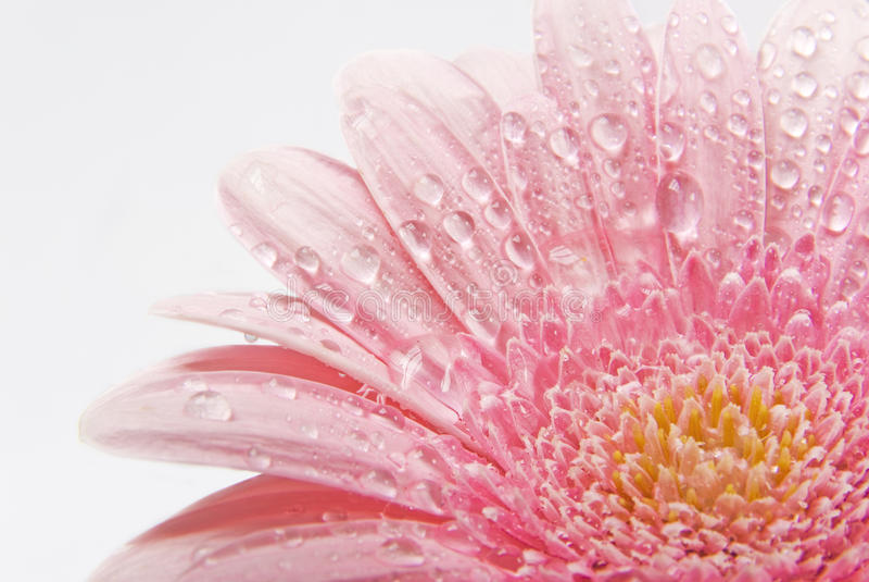 Fresh flower royalty free stock image