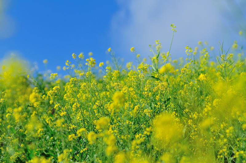 Fresh flower field stock image