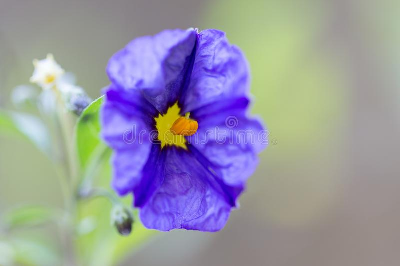 Fresh flower on plant in garden. In sunny day stock photo