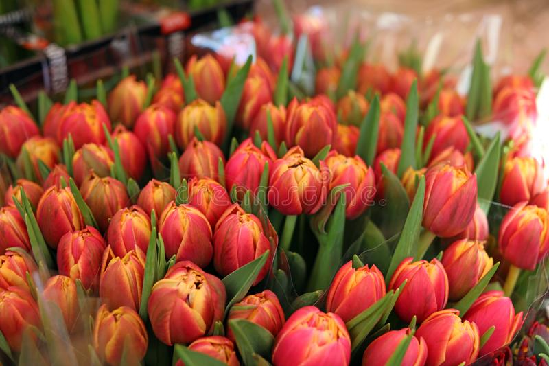Fresh flowers at farmer market in France, Europe. Italian Spanish and French flowers. Street French market at Nice. stock photo