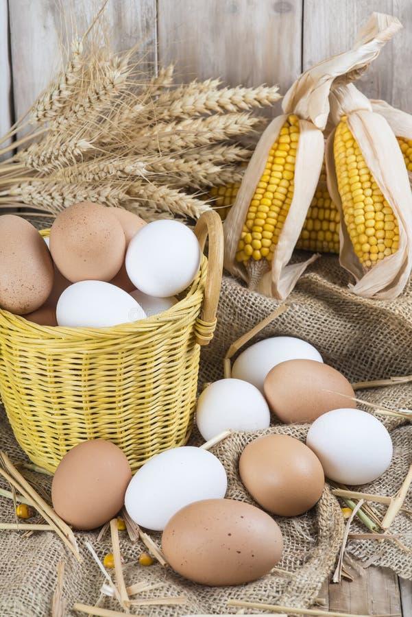 Fresh free range eggs royalty free stock photography