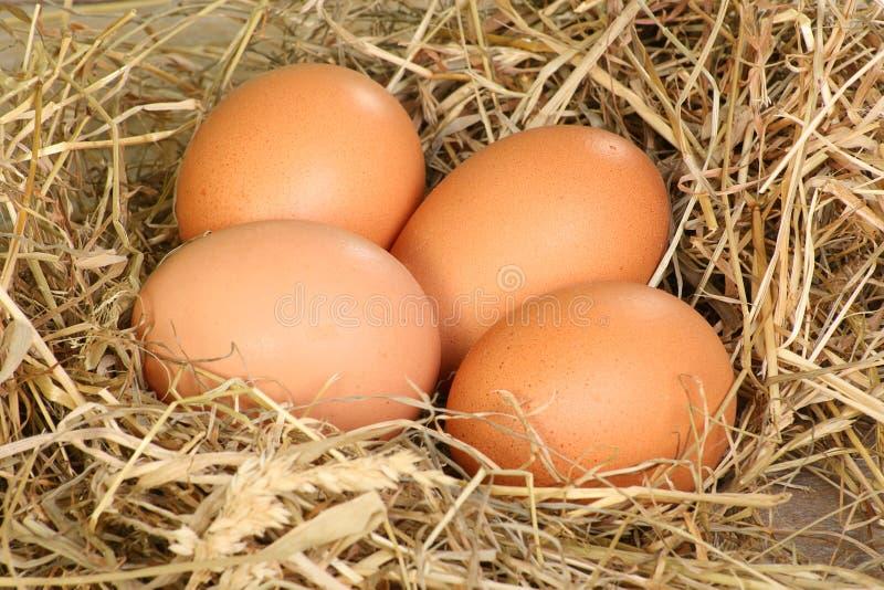 Fresh freerange eggs. Four freerange eggs in hay royalty free stock photo