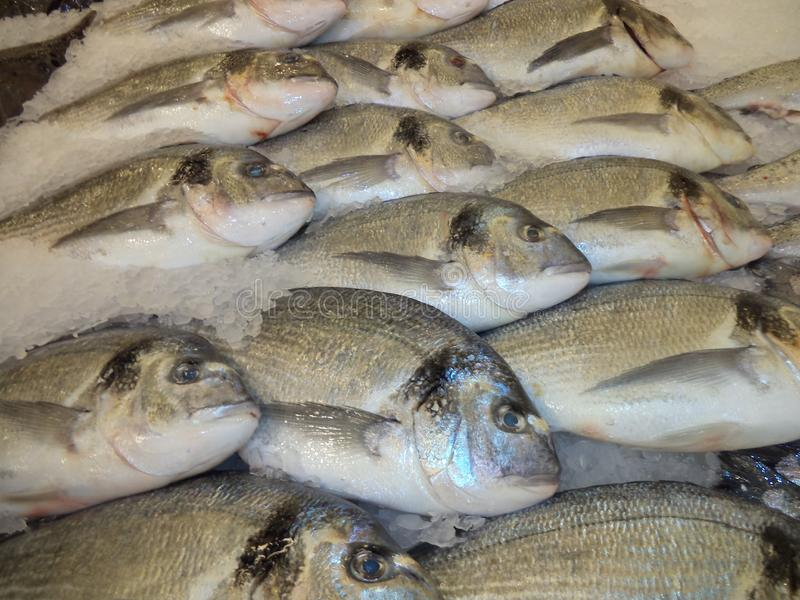 Fresh frozen Dorado fish on the counter in the store royalty free stock image