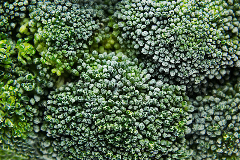 Fresh frozen green broccoli with hoarfrost closeup as background. Healthy vitamin food stock image