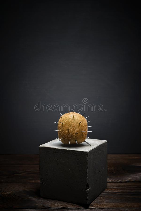 Fresh fruit on dark background on concrete stand. Soft shaggy kiwi fruit with sharp thorns royalty free stock image