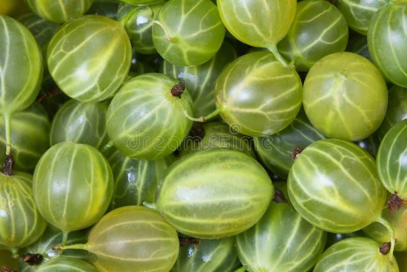 Fresh fruit gooseberries. Fresh green gooseberries making full frame background royalty free stock photos