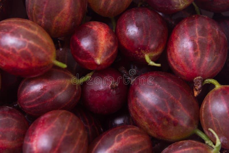 Fresh fruit gooseberries. Fresh gooseberries making full frame background stock photography