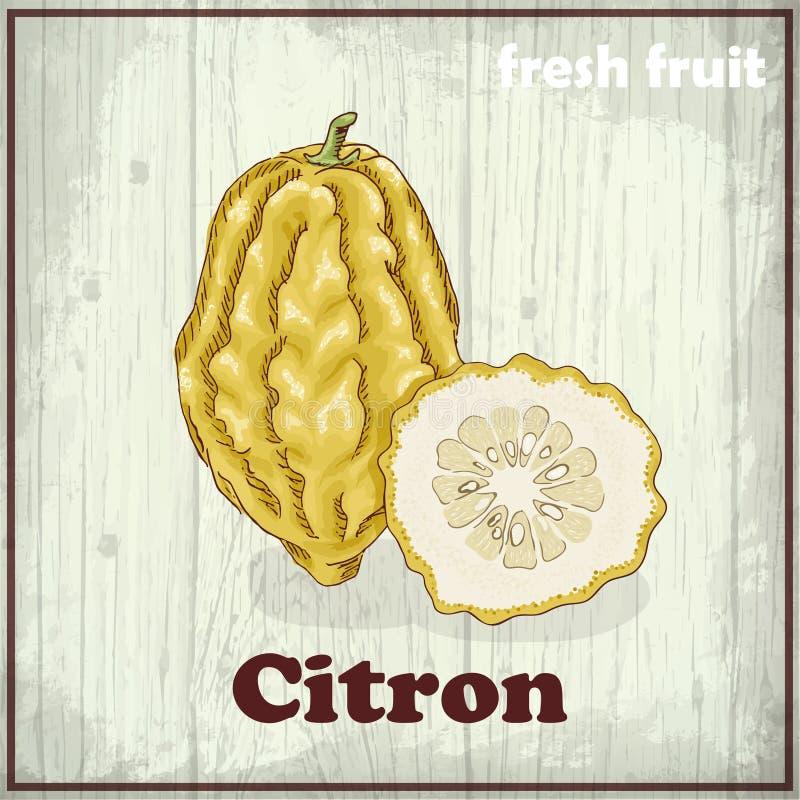 Fresh fruit sketch background. Hand drawing illustration of citron. Hand drawing illustration of citron. Vector illustration for your design vector illustration
