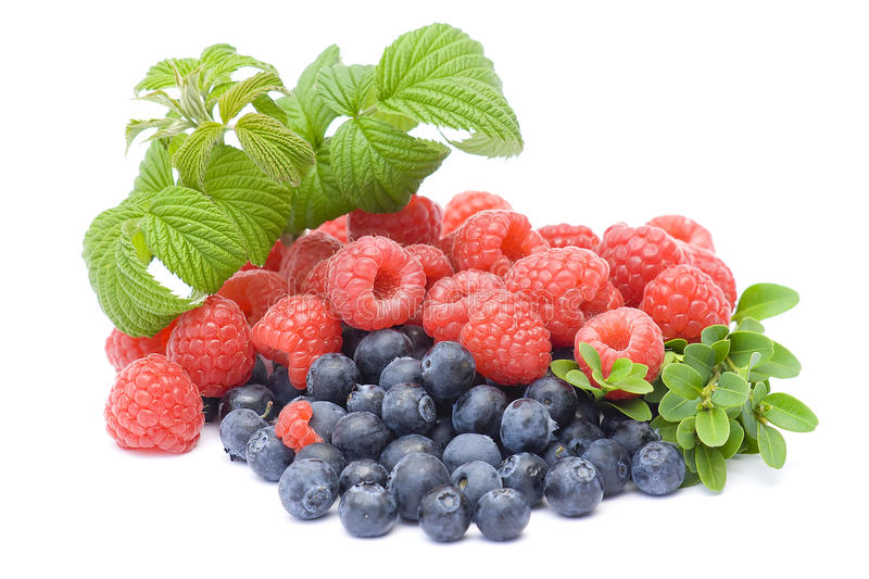 Download Fresh fruits stock photo. Image of dessert, fresh, forest - 15180360