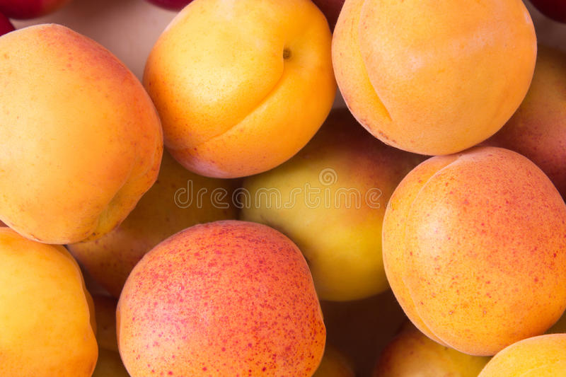 Fresh fruits of apricot. Ripe fruit fresh apricot, closeup photo royalty free stock photos