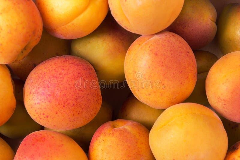 Fresh fruits of apricot. Ripe fruit fresh apricot, closeup photo stock image